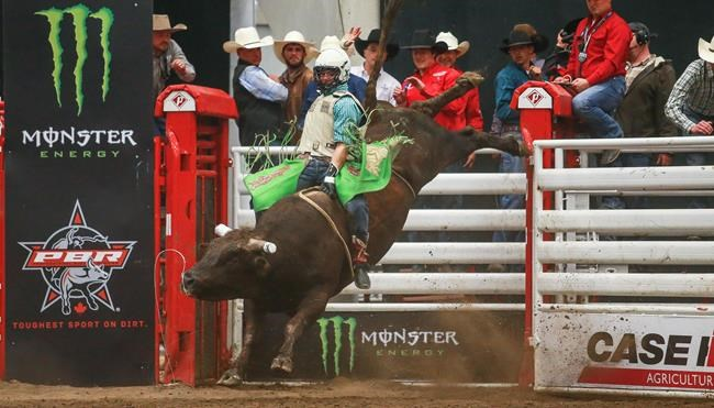 New Canadian bull-riding tour showcases 'the toughest sport on dirt