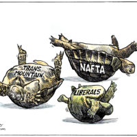 Liberals and their policies are floundering turtles on their backs